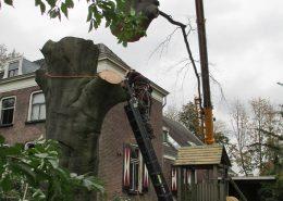 Verwijderen bomen Boomontzorging-min